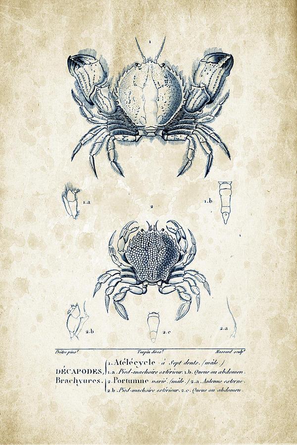 Crabs Digital Art - Crustaceans - 1825 - 02 by Aged Pixel