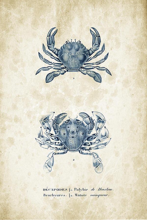 Crabs Digital Art - Crustaceans - 1825 - 05 by Aged Pixel