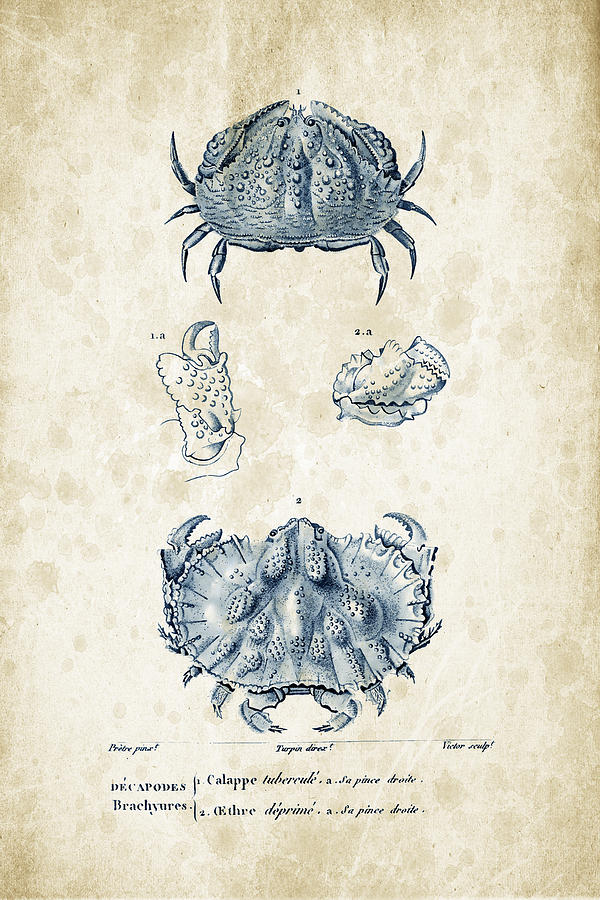 Crabs Digital Art - Crustaceans - 1825 - 08 by Aged Pixel