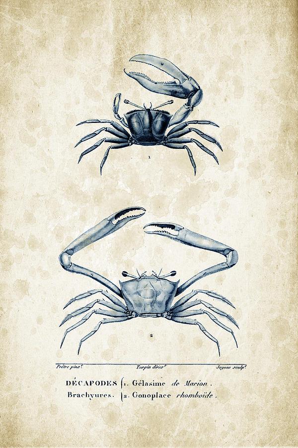 Crabs Digital Art - Crustaceans - 1825 - 11 by Aged Pixel