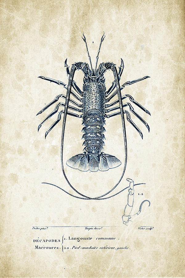 Crabs Digital Art - Crustaceans - 1825 - 30 by Aged Pixel