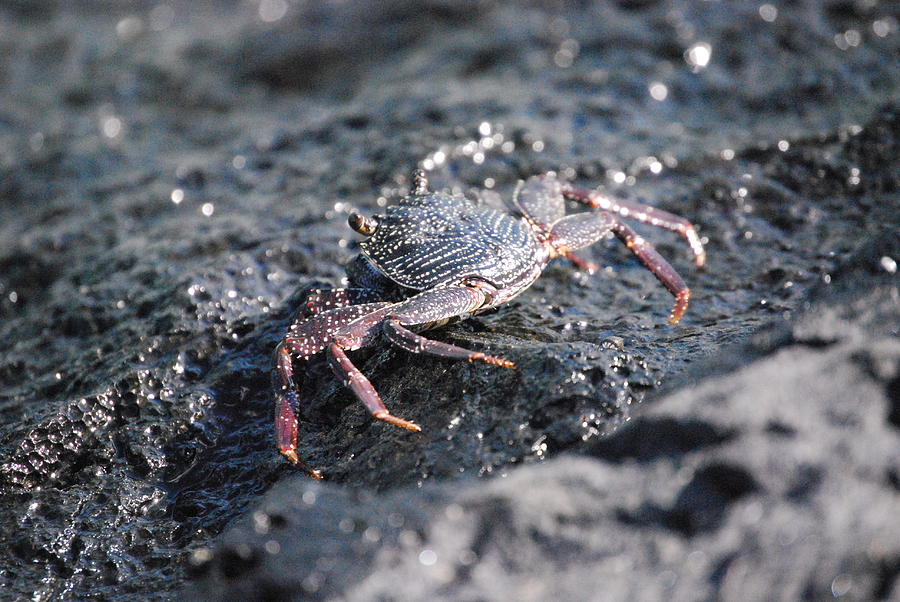 Crab Photograph - Crustation by Lakida Mcnair