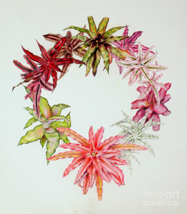 Cryptanthus wreath by Penrith Goff