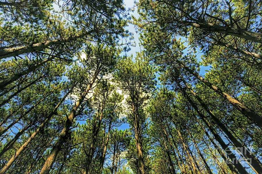 Pine Grove Photograph - Crystal Lake Il Pine Grove And Sky by Tom Jelen
