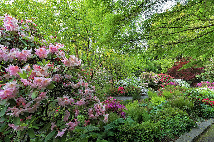 Crystal Springs Photograph - Crystal Springs Rhododendron Garden In Bloom by David Gn