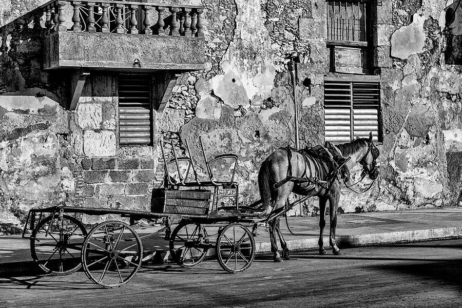 Cuban Horse Power BW Photograph by Erron