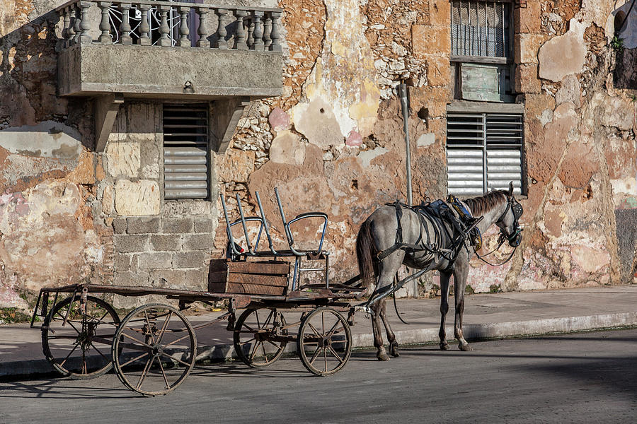 Cuban Horse Power FC Photograph by Erron