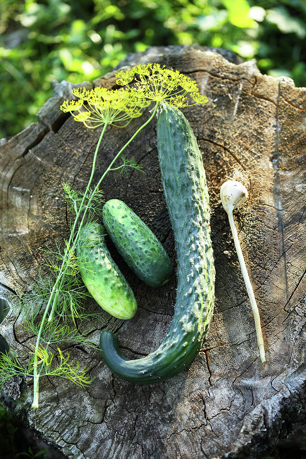 Cucumbers With Garlic And Dill Photograph