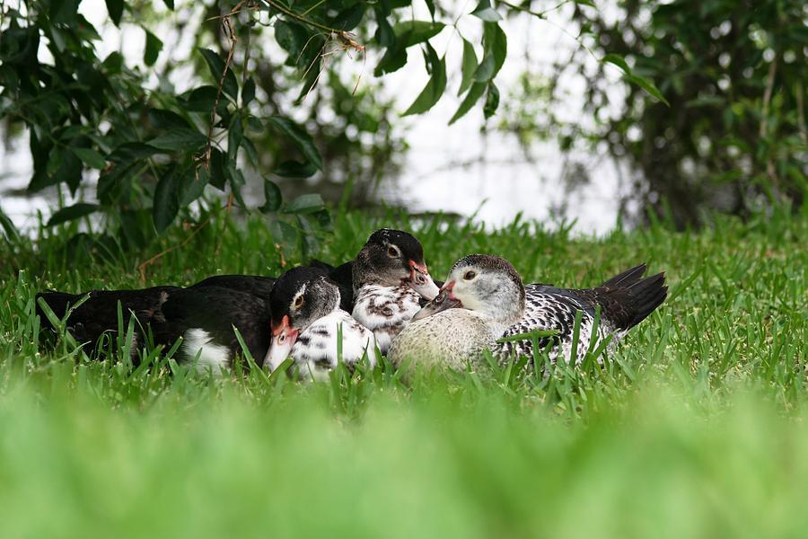 Cuddling Photograph - Cuddle Buddies by David S Reynolds