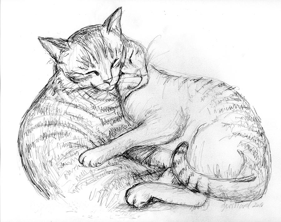 Cuddly Cats Drawing By Deborah Willard