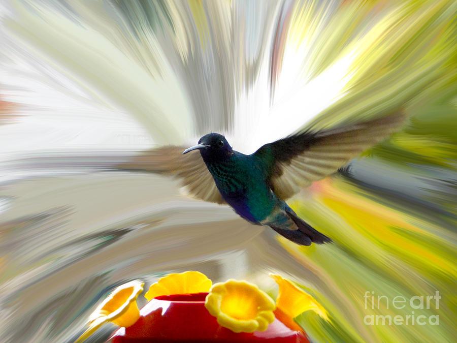 Canadian Photograph - Cuenca Hummingbird Series 1 by Al Bourassa