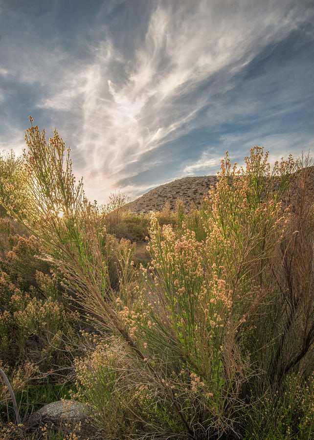 Anza-borrego Desert Photograph - Culp Valley Sunset by Joseph Smith