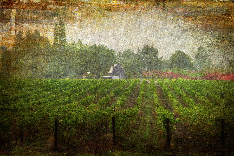 Cultivating A Chardonnay by Jeffrey Jensen