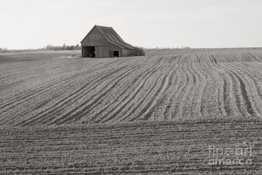 Farm Photograph - Cultivation by Lionel F Stevenson