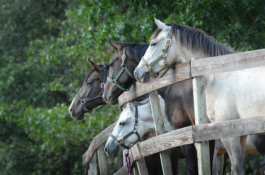 Equine Photograph - Curiosity by Alicia Frese Klenk