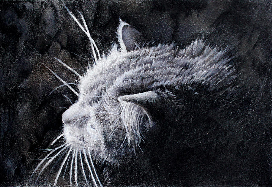 Colored Pencil Drawing - Curious Cat by Kay Walker