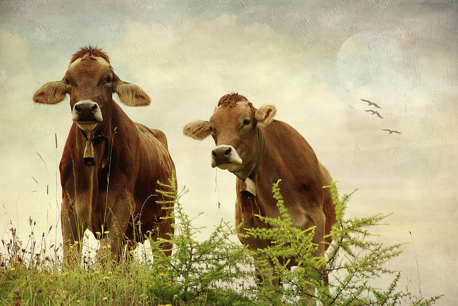 Curious Cows by Annie Snel