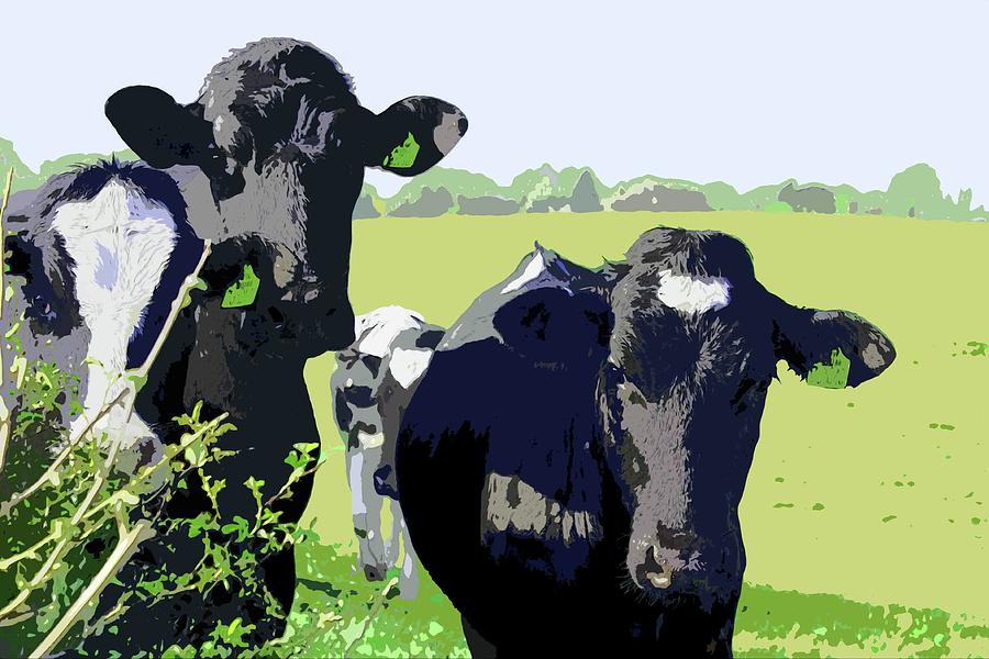 Curious Cows by Mary Castellan