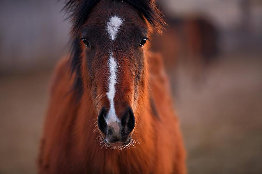 Horse Photograph - Curious by Deborah Johnson