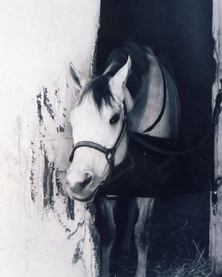 Horse Photograph - Curious Joe by Jennifer Ott