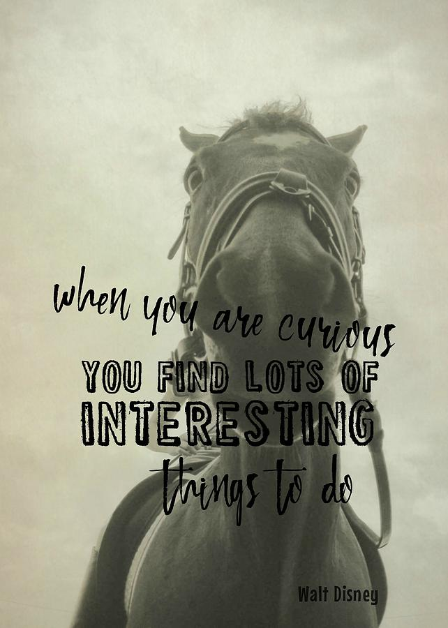 Horse Photograph - Curious Kirby Quote by JAMART Photography