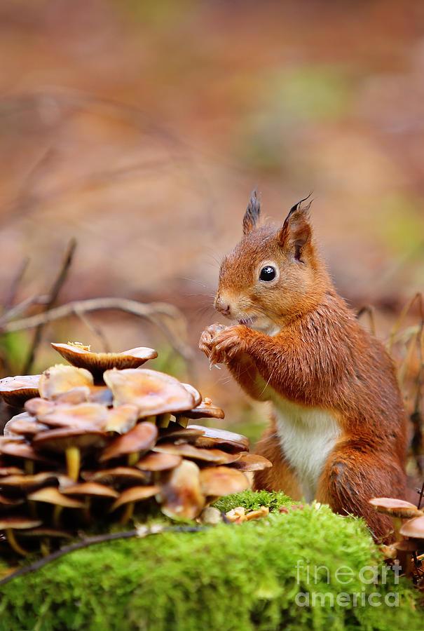 Curious Little Fellow Photograph