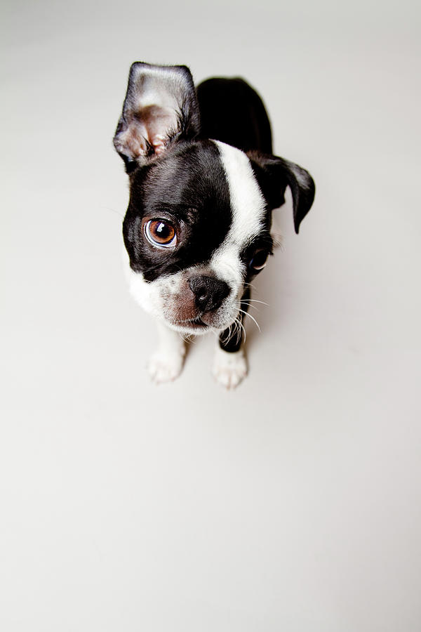 Vertical Photograph - Curious by Square Dog Photography