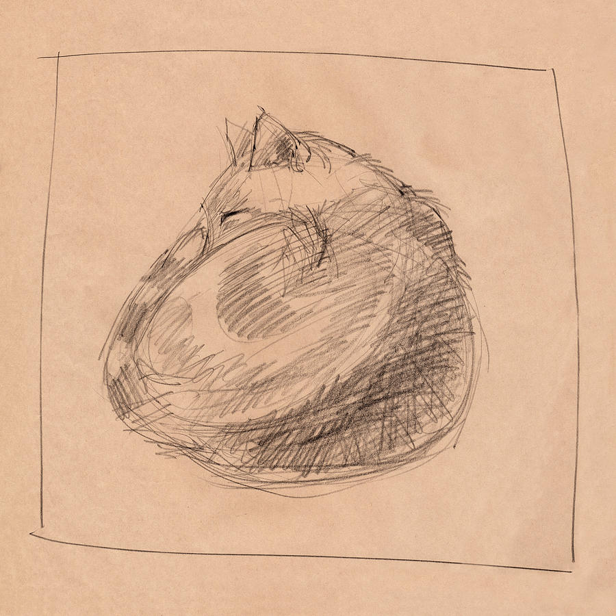 Curled Up Drawing by Judith Kunzle