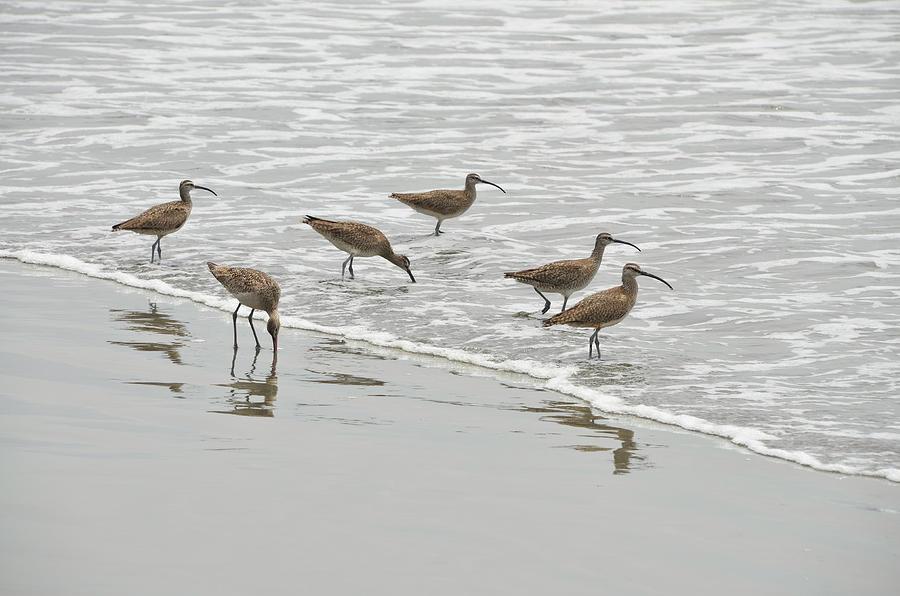 Curlews at the Beach by Erik Burg
