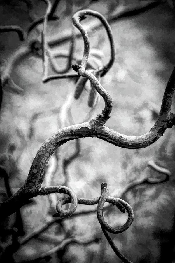 Curly by Carl Simmerman