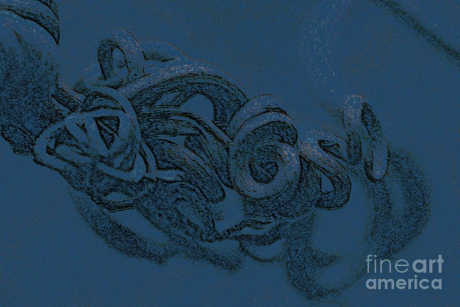 Nature Photography Digital Art - Curly Swirly by Kim Henderson