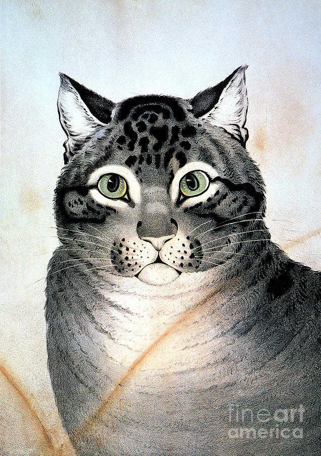19th Century Painting - Currier And Ives Cat by Granger