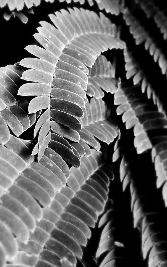 Fern Photograph - Curve by JJ Holley