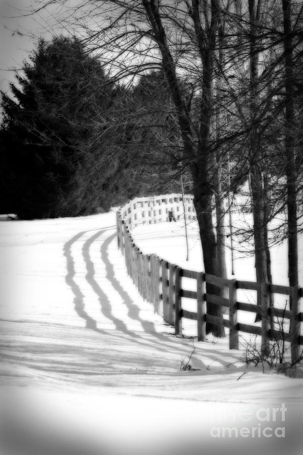Fence Photograph - Curving Around The Corner by Cathy Beharriell