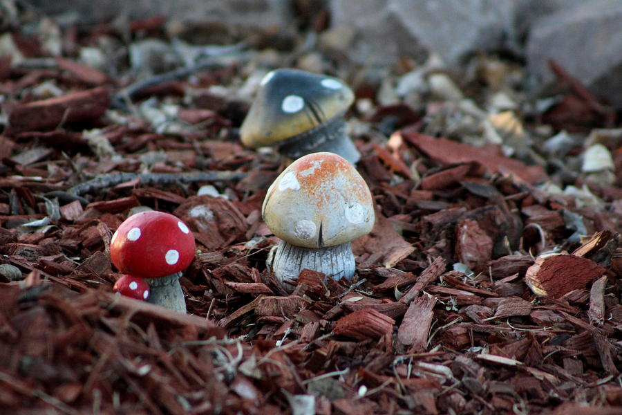 Tombstone Arizona Photograph - Cluster of Toadstools  in Fairy Garden by Colleen Cornelius