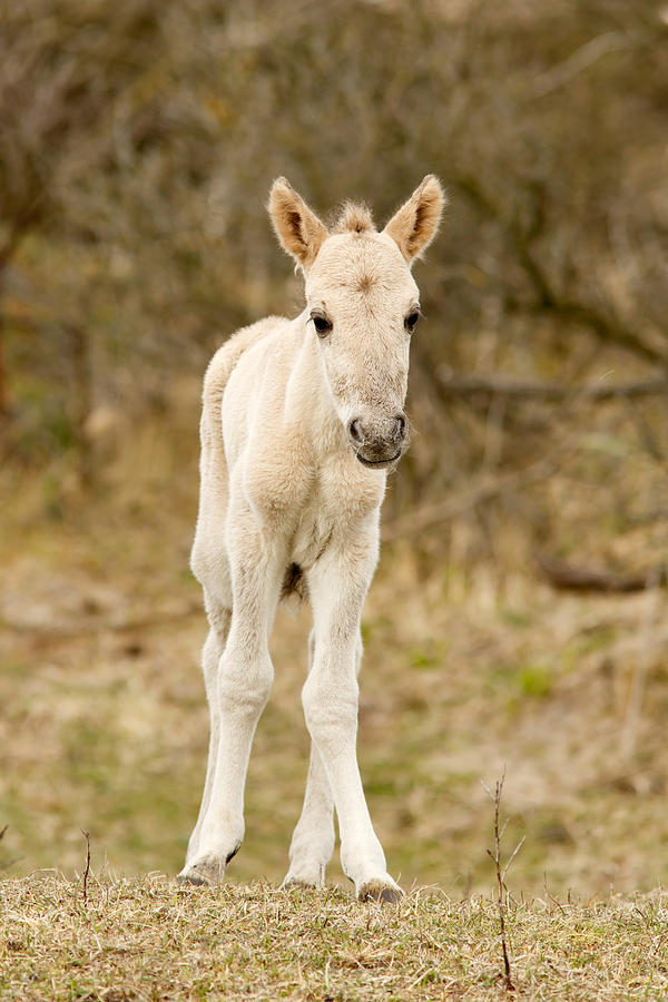 Cute Baby Horse Photograph By Roeselien Raimond