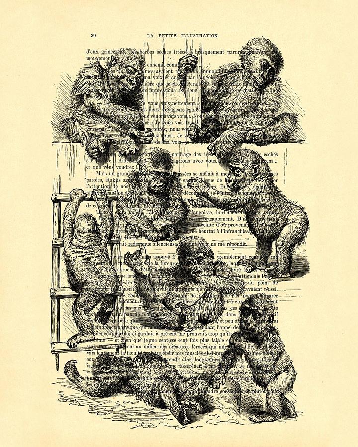 Gorilla Digital Art - Baby Monkeys Playing Black And White Antique Illustration by Madame Memento