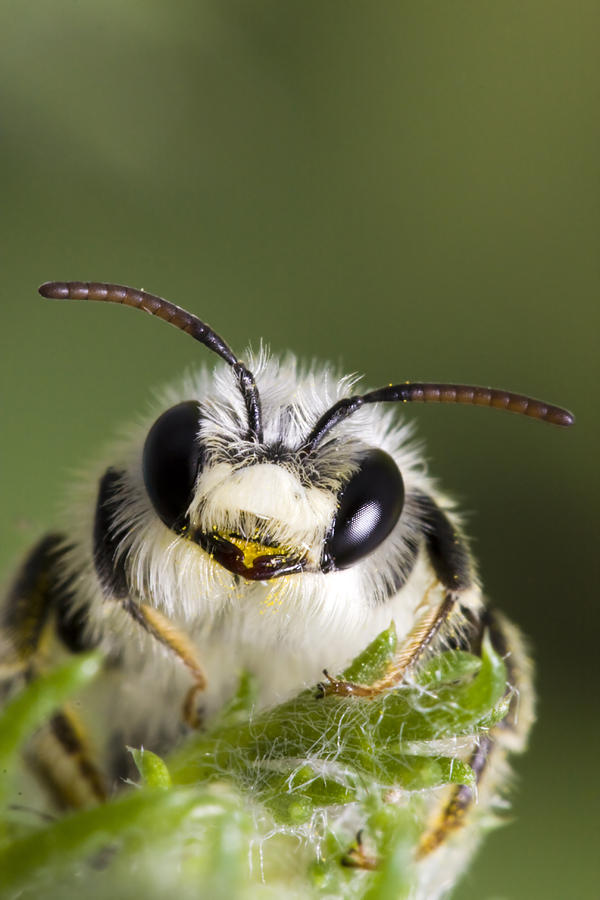 Bee Photograph - Cute Bee by Andre Goncalves