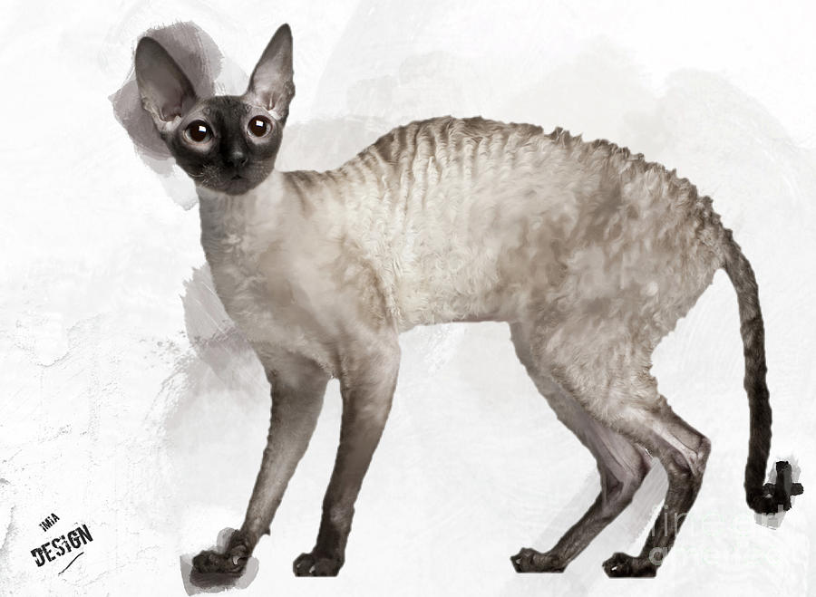 Cornish Rex Digital Art - Cute Cornish Rex Youngster by Maria Astedt