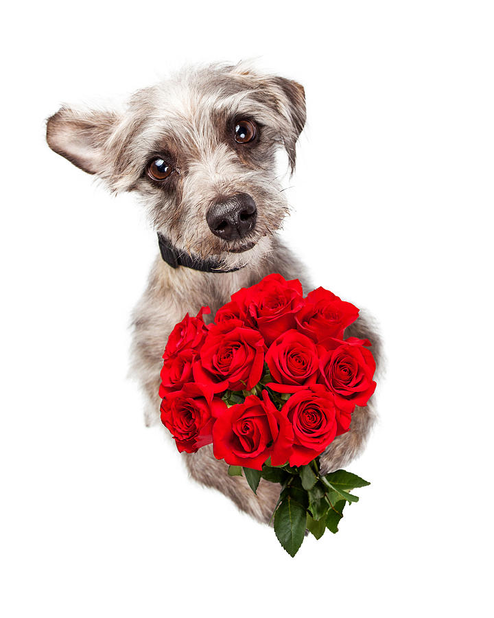 Cute Dog With Dozen Red Roses Photograph