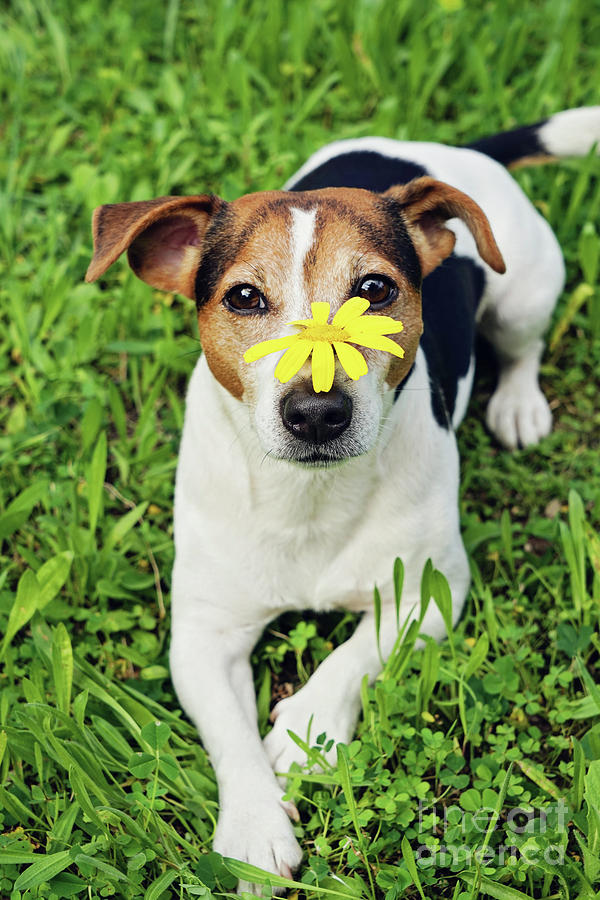 Cute Dog With Flower Photograph
