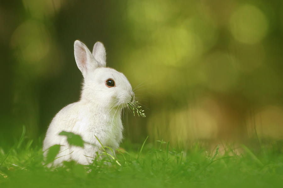 Cute Overload Series - Happy White Rabbit Photograph by Roeselien Raimond