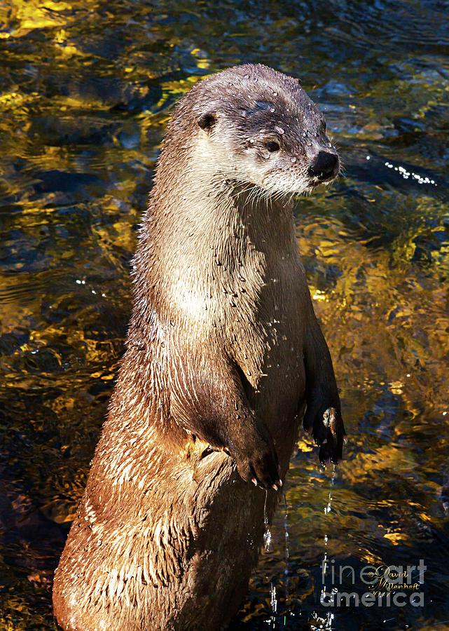 Cute Sea Otter, Animal Decor, Nursery Decor, Otter Phone Case, Otter Throw Pillow, Otter Gift,  by David Millenheft