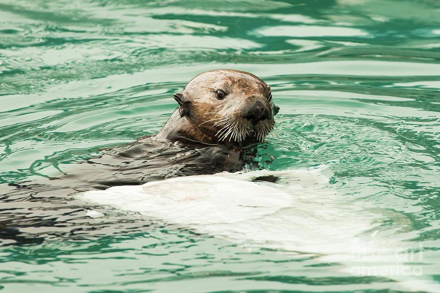 Cute Sea Otter Photograph By Edie Ann Mendenhall