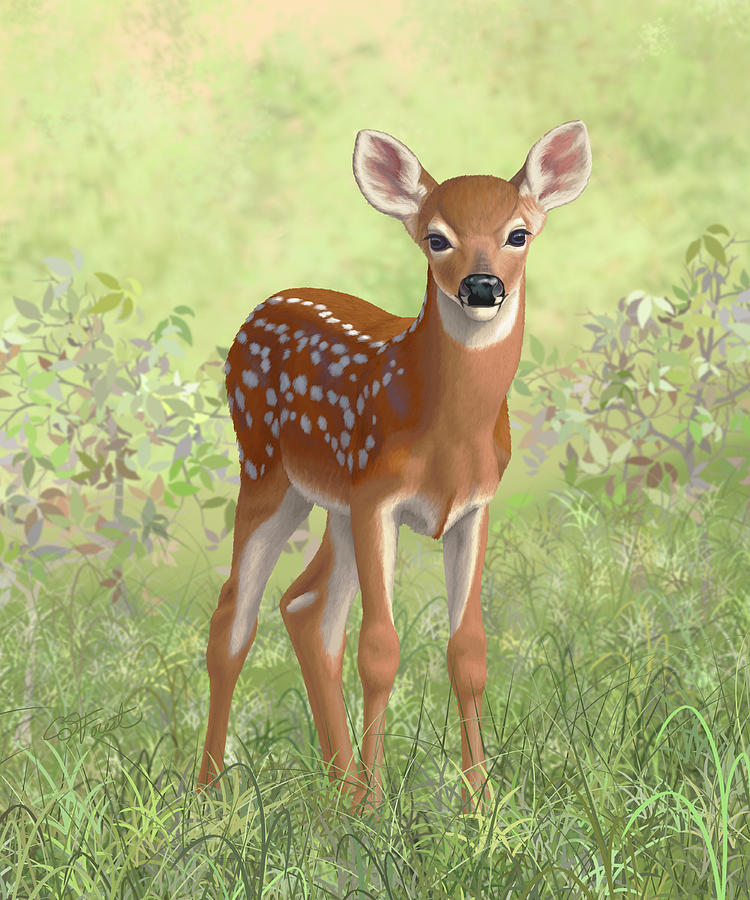 Cute Whitetail Deer Fawn Painting by Crista Forest - photo#46