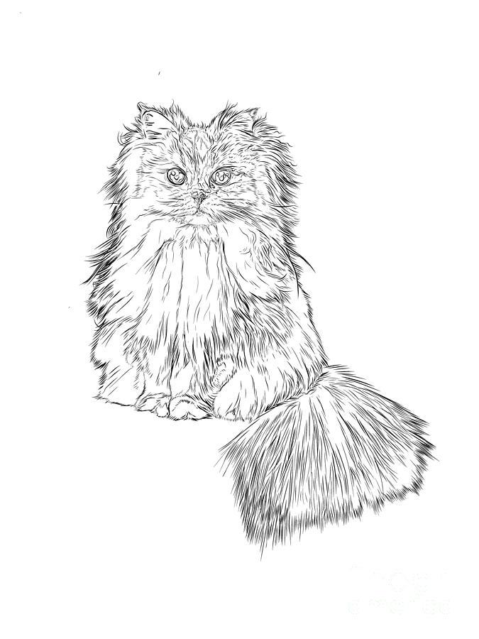 Cat Digital Art - Cutest Kitten On The Web by Stephen Carcello