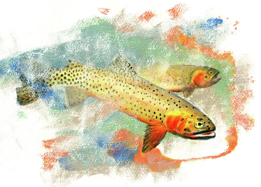 Cutthroat Trout Pastel - Cutthroat Trout by Janice Lawrence