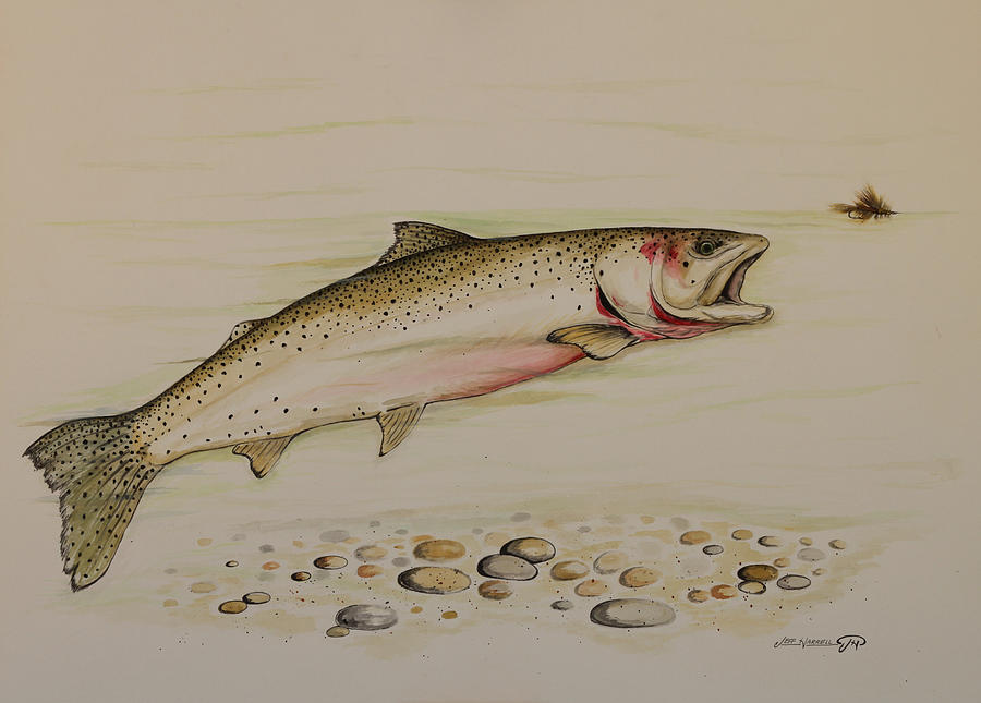 Cutthroat Trout Painting - Cutthroat Trout by Jeff Harrell
