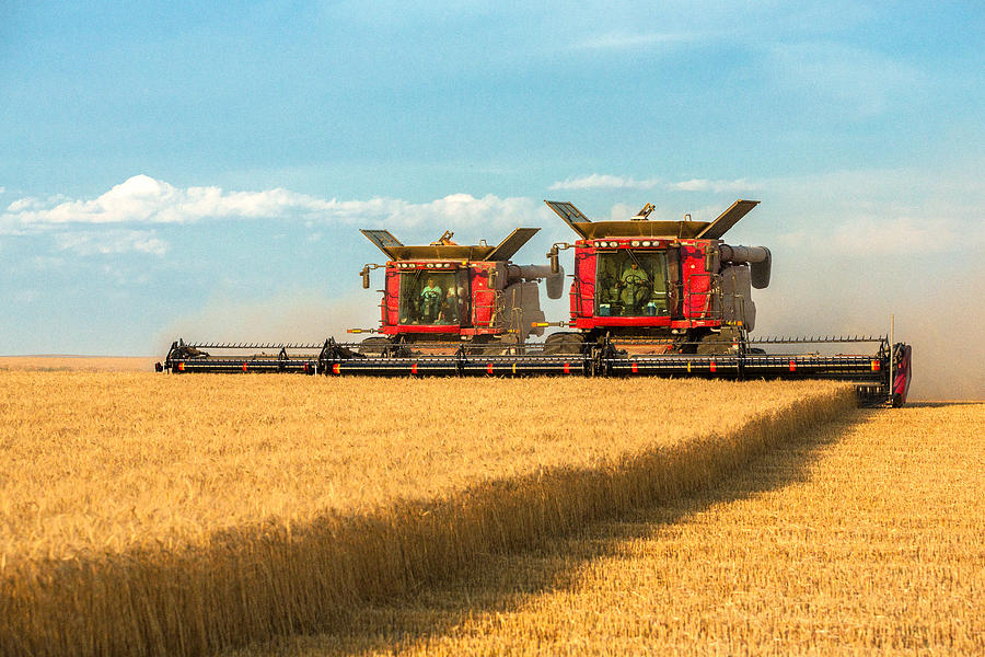 Two Photograph - Cutting Wheat by Todd Klassy