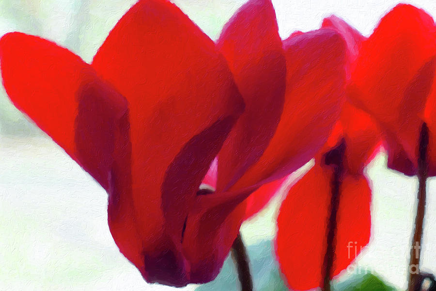 Red Painting - Cyclamen by C L Lassila